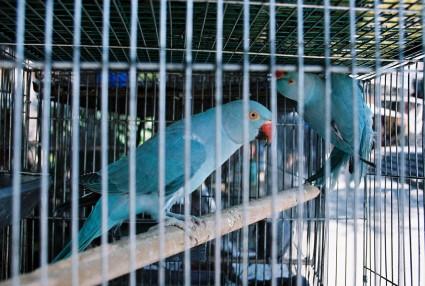 Mercado Libertad aviary, Guadalajara