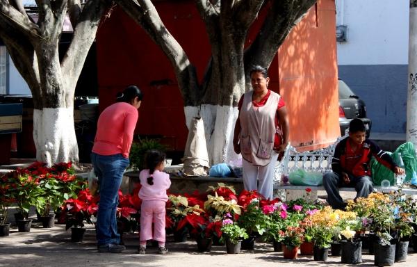 Florist on the plaza, San Cristóbal Zapotitlán