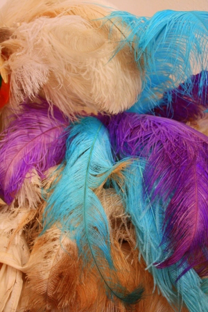 Dyed ostrich feathers, Sandra Luz's workshop,San Cristóbal Zapotitlán