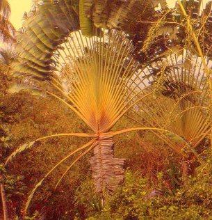 Andromeda Gardens Barbados 09