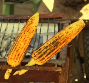 Freshly roasted corn cool on a curbside grill