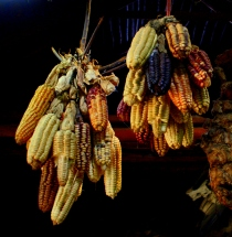 Corn is only one of the foods air-cured by the Incas.