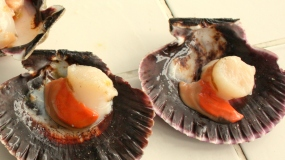 Scallops at the San Ysidro Market, Lima, Peru