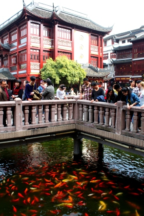 Visitors feed the coy in Old Shanghai.